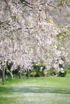 2011久喜青葉公園004