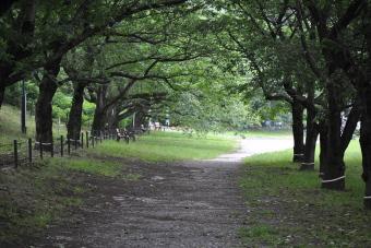 幸手権現堂公園20110601_001