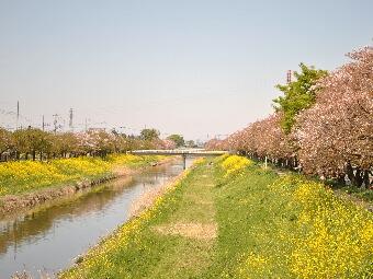 2011久喜青葉団地001