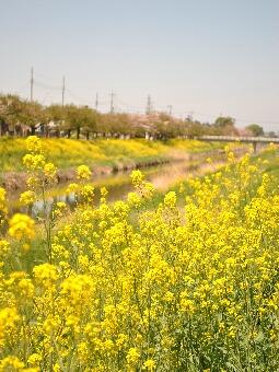 2011久喜青葉団地002