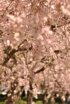 2011久喜青葉公園001