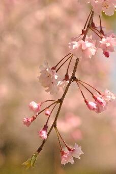 2011久喜青葉公園002