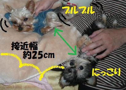 016+-+繧ウ繝斐・_convert_20081103152319