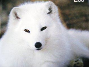 ♪冬毛で白いみたい♪