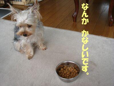 PHOTO460.jpg