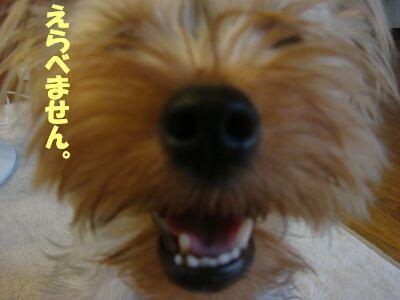 PHOTO469.jpg