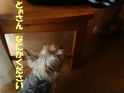 PHOTO487.jpg