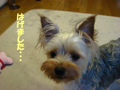 PHOTO491.jpg