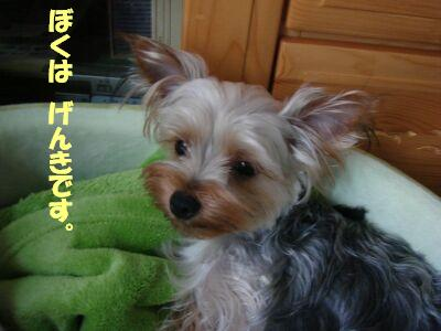 PHOTO494.jpg