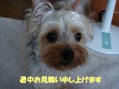 PHOTO510.jpg