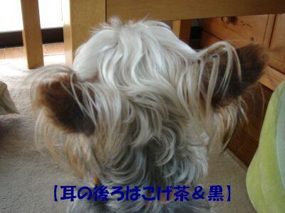 PHOTO514.jpg