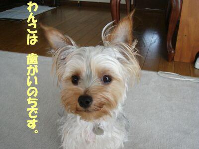 PHOTO519.jpg