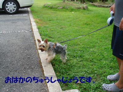 PHOTO542.jpg