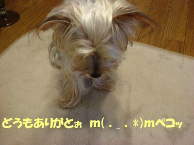 PHOTO563.jpg