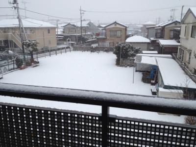 0229雪