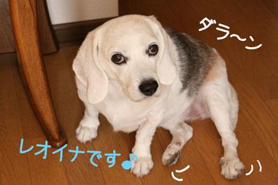 15_20081017105014.jpg