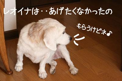 17_20081017105034.jpg