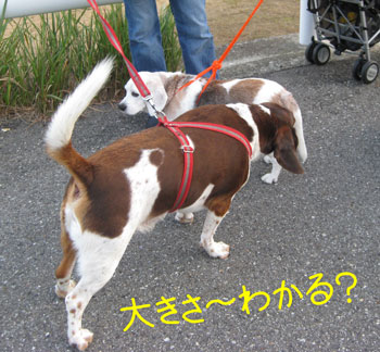 19_20081016194650.jpg