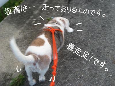 1_20081012200501.jpg