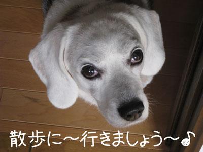 1_20081013210321.jpg