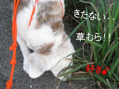 2_20081012200507.jpg