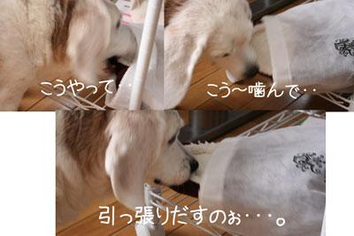 2_20081015221243.jpg