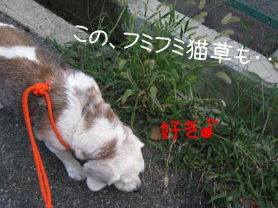 5_20081012200527.jpg