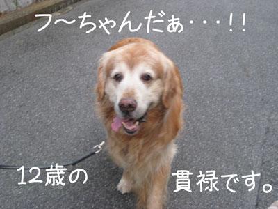 6_20081012200534.jpg