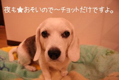 6_20081015155524.jpg