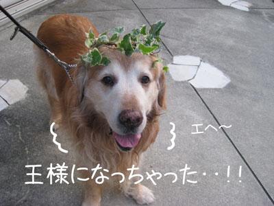 7_20081012200545.jpg