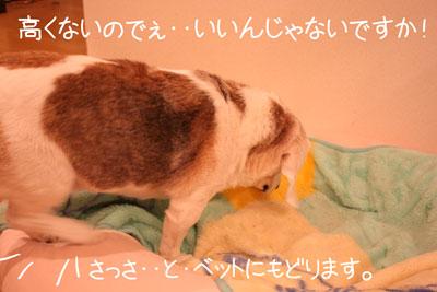 8_20081015155544.jpg