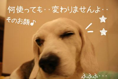 9_20081015155551.jpg
