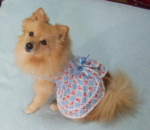 レオお洋服(キャッシーママさんから)