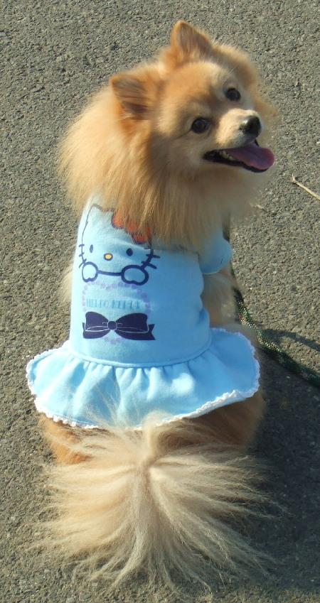 キティちゃんのお洋服(振り向き)