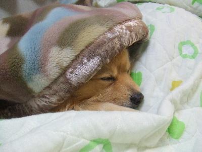 眠い。。。