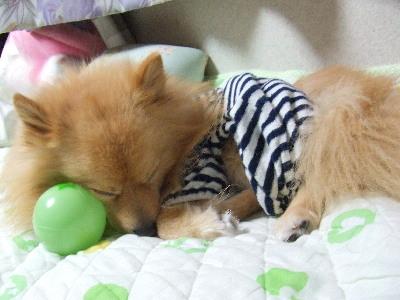 眠いねレオ!