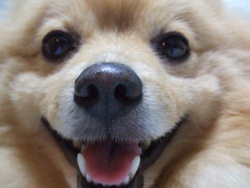 レオ鼻デカ笑顔