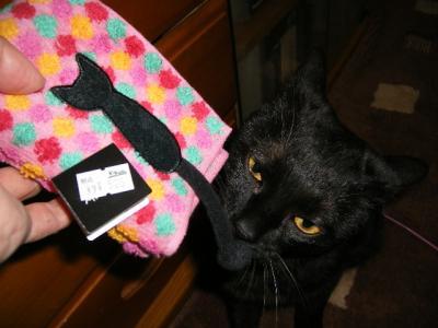 クロと黒猫ハンカチ