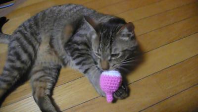 おもちゃ大喜びタロ
