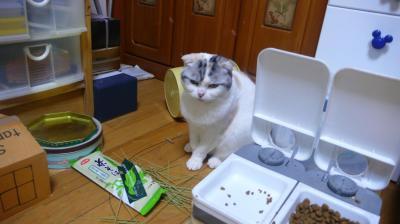 犯猫はもも?