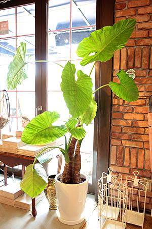 2011527-観葉植物