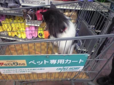 お買い物カーゴに乗ったレクちゃん