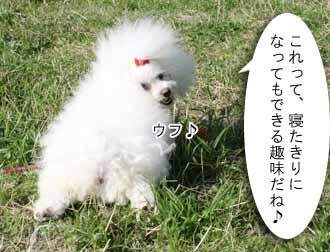 IMG_9374-e1.jpg