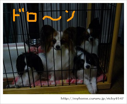 image4701063.jpg