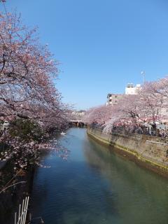 20120408sakura08.jpg