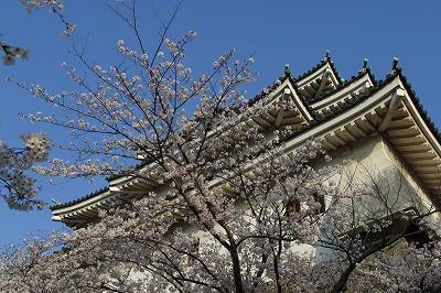 和歌山城 桜