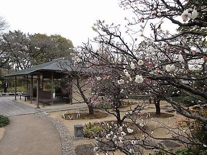紅葉山庭園梅景観-3