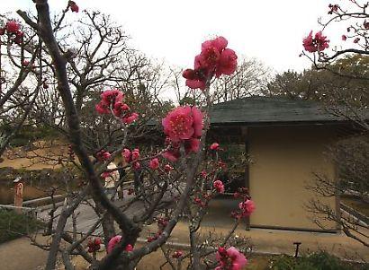 紅葉山庭園梅景観-4