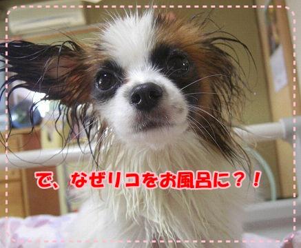 お風呂に入れられちゃったよ・・・