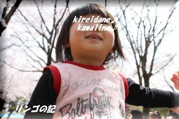 さくら2011②